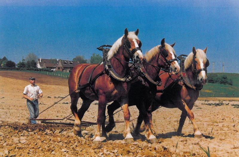 paarden om mee te spelen